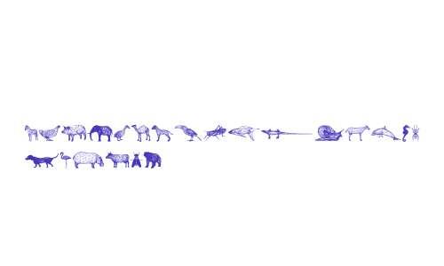 3D Animals Regular