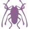 Beetle Insect Trictenotomidae